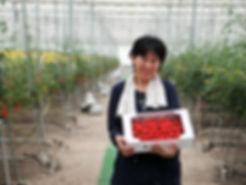 ハッピートマト収穫 箱入りミニトマト