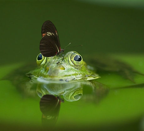 frog-540812_1920_edited.jpg