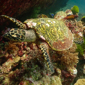 Should you dive the Similan Islands as a Day Trip?