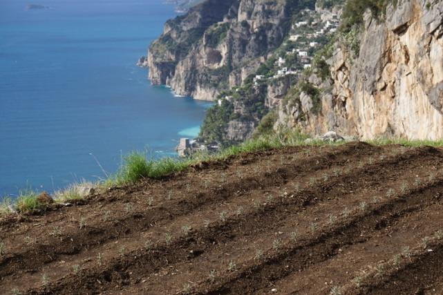 Panoramica trapianto piantine con sfondo mare