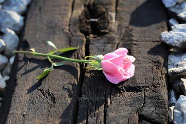 pink-rose-on-railway-3538324_1920.jpg