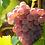 Thumbnail: 6 x Bottles of Domaine Salitis Pays d'Oc Grenache Gris Rosé 2016