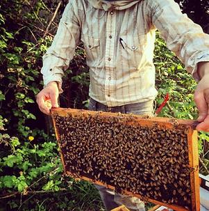 beekeeper2.png