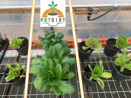 POTDIRT Planting Trial