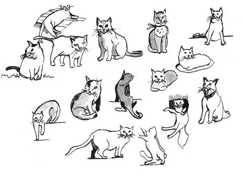 Cat Studies 01
