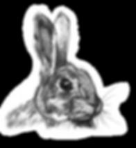 bunny_transparant.png