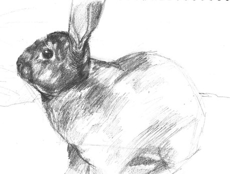 Rabbit Study 02