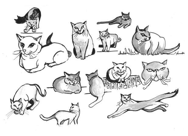 Cat Studies 02