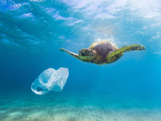 World Ocean Day: discover 6 startups on a mission to save the ocean