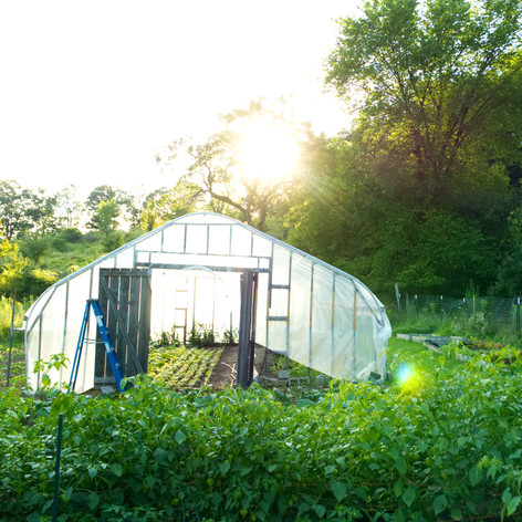 Greenhouse in the Morning