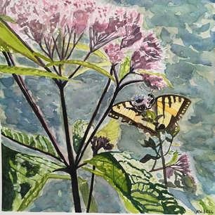 Swallowtail, De Grassi Point