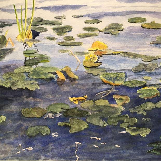 Lily Pads, Lake Simcoe