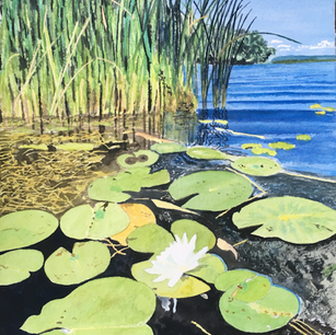 Lily Pad, De Grassi Point, Lake Simcoe