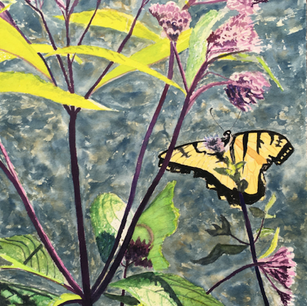 Swallowtail with Joe Pye Weed