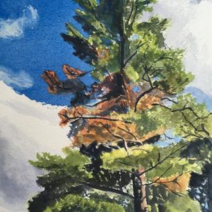 Towering Pine, De Grassi Point