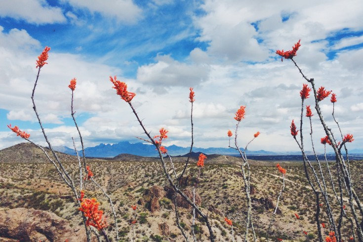springtime-with-the-ocotillos_t20_6yxLwY