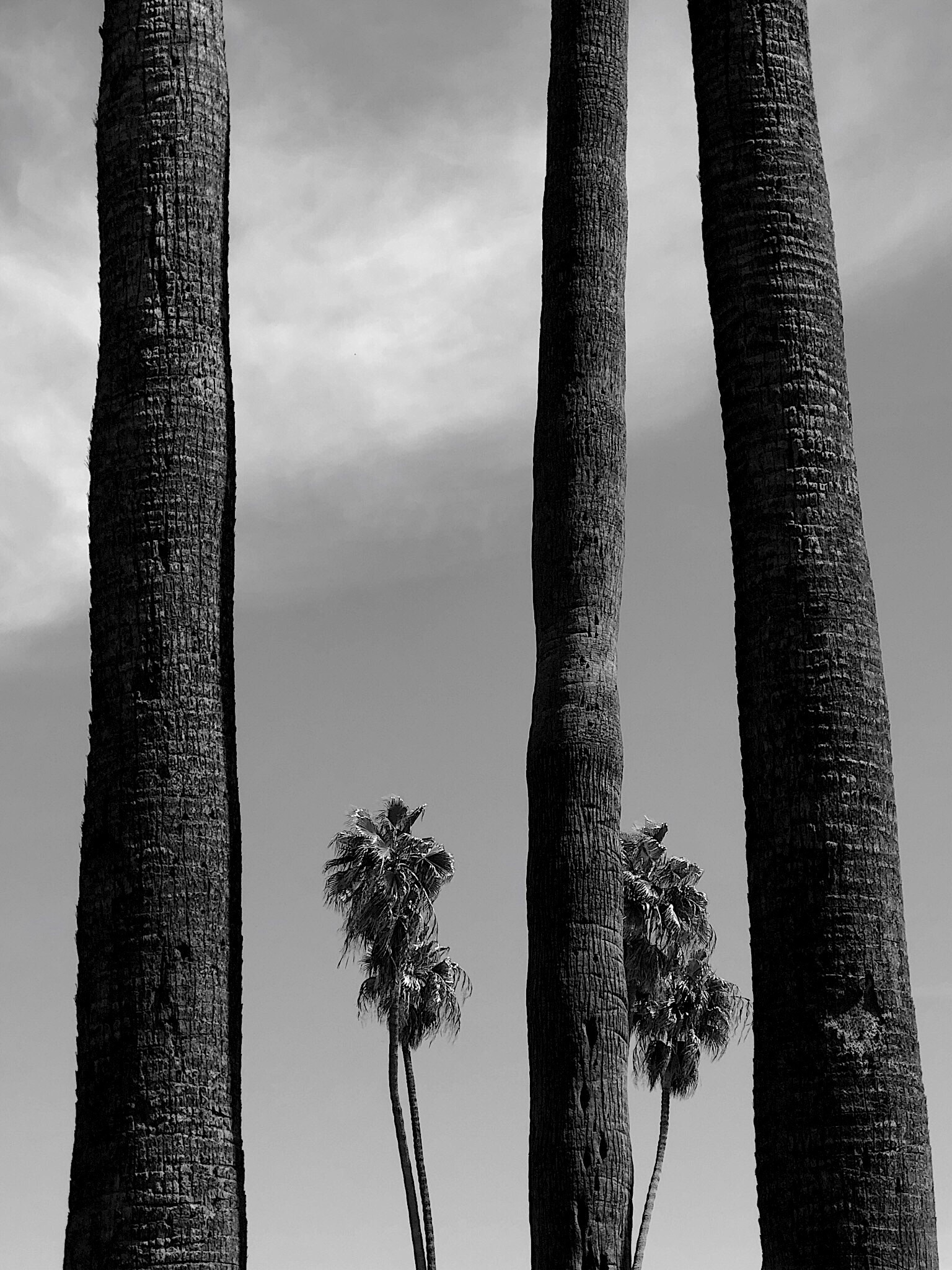 PALM TREE SERIES, #7 (2019)