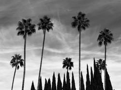 PALM TREE SERIES, #12 (2019)