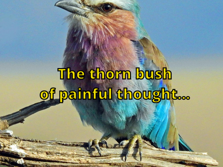 The Thorn Bush of Painful Thought