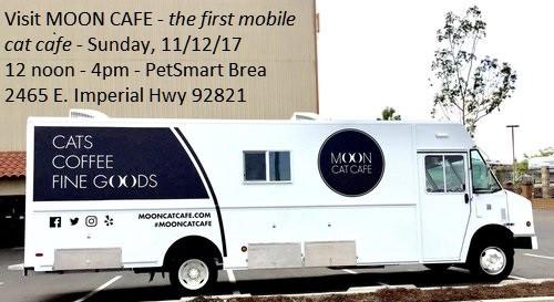 Experience Moon Café: The first ever mobile cat café