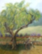 Olive Tree Harvest