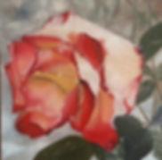 Snowy Rose