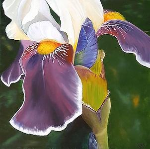 Iris Bud and Spathe