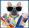 Dog with ice cream cone