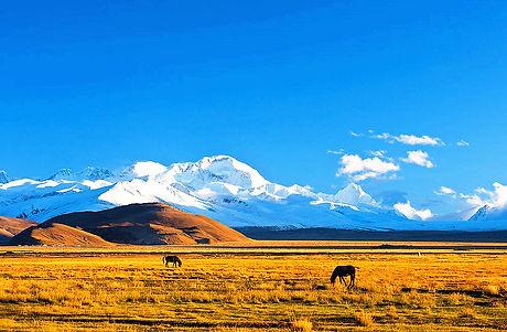 Tibetfaces New Tingri