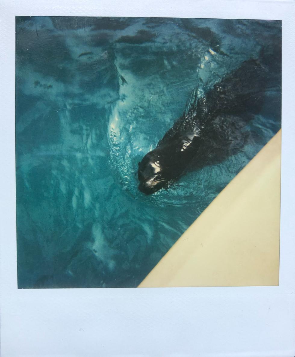 creature in water