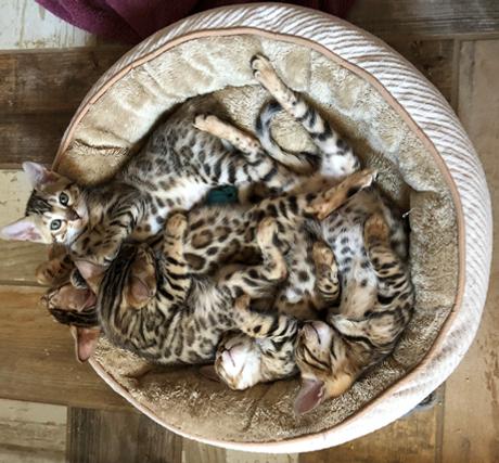 kitten image.png
