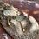 "Thumbnail: Enameled Gold plated earrings ""Dido"""