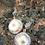 Thumbnail: Solar Agate  pave stud eariings