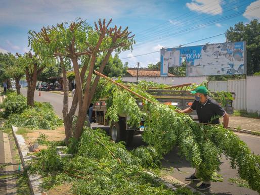 SEMAD de Piripiri inicia podação de árvores na Avenida Aderson Ferreira