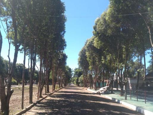SEMAD continua serviço de poda em ruas e avenidas de Piripiri