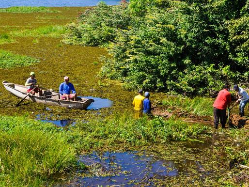 Secretaria de Meio Ambiente começa a retirada de aguapés no açude Caldeirão