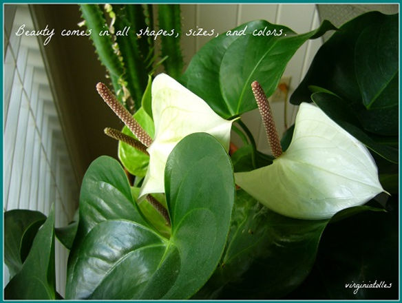 WhiteAnthurium-framed.jpg