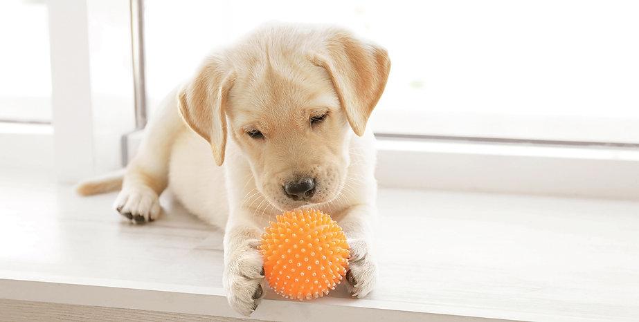 Reha Pfoten Hundephysiotherapie