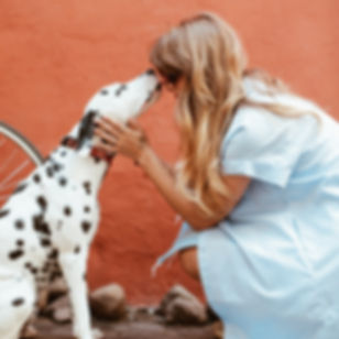 adult-black-and-white-dalmatian-licking-