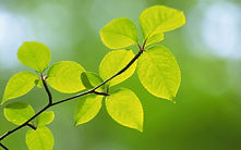 Cura sui | Filosofía para la vida