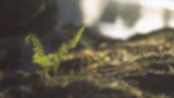 leaves-2578034_1920.jpg
