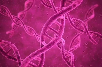 pink_DNA_strands.jpg