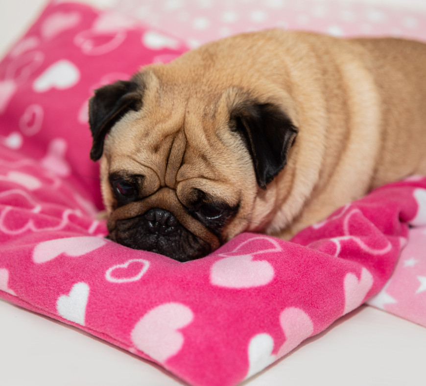 Doggy Duvets and Cosy Cats