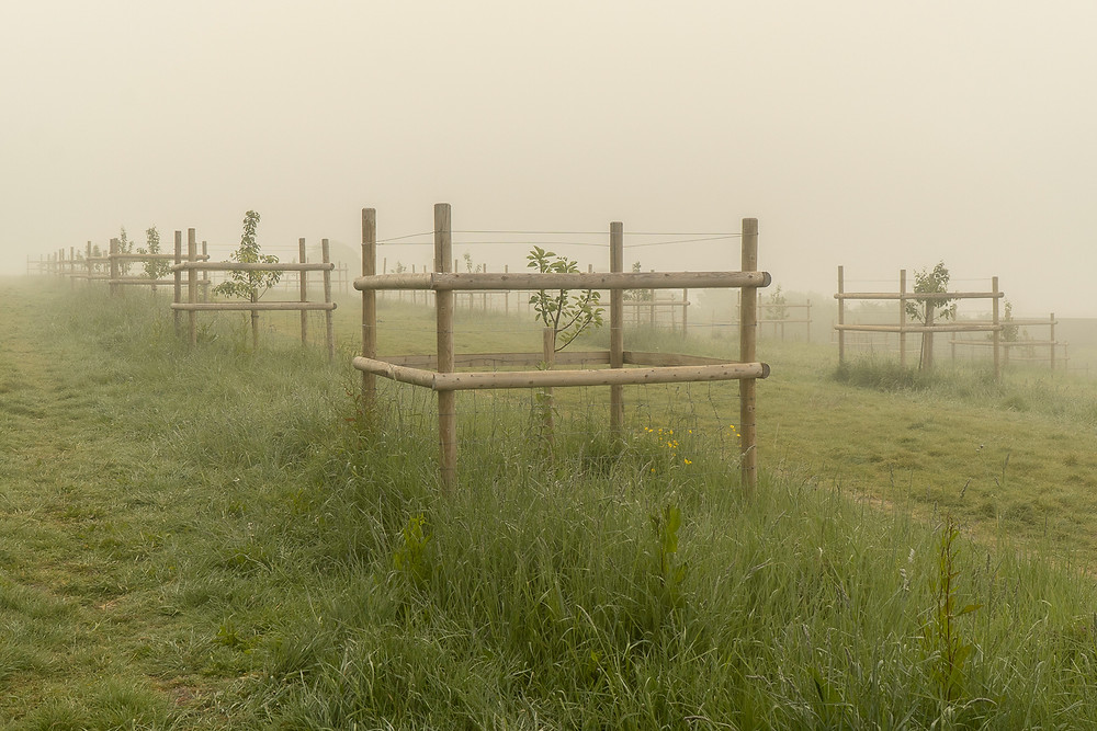 Bristol Fog Trees Protection © Samantha Brown