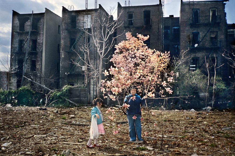 Meryl Meisler, Magnolia Tree, 1983