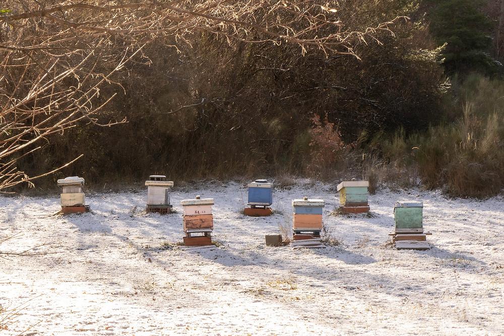 Seven Bee Hives © Samantha Brown