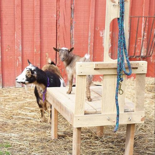 Goat Stand - Custom Built