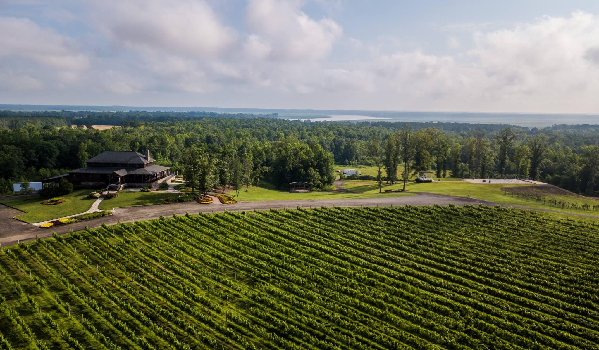 Saude Creek Vineyard