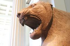 Museum Animals