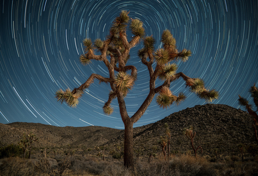 Tree Trippin'
